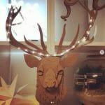 Recreate_reindeer