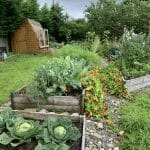 Kasi garden beds and shed